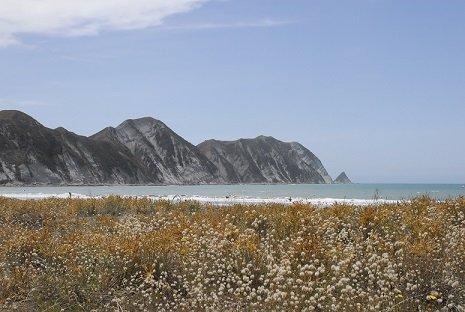Scenic East Cape