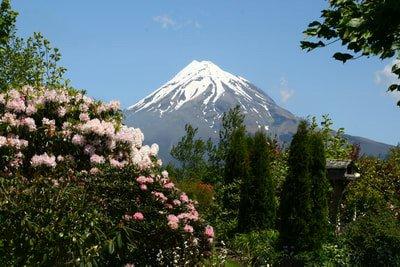 New Zealand Garden Extravaganza