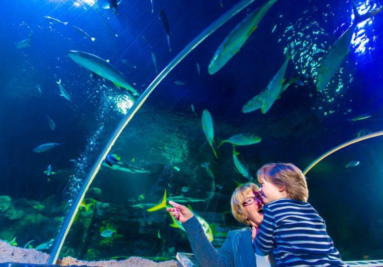 Fish at Kelly Tarlton's SeaLife