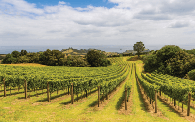 North Island Food & Wine Tour