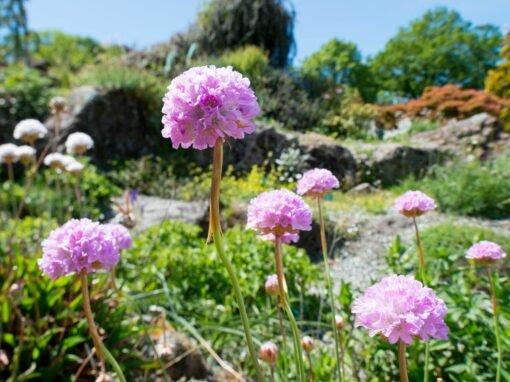 South Island Garden Spectacular