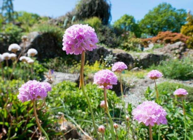 South Island Garden