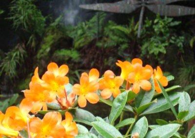 Auckland Eden Gardens