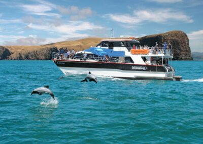 Akaroa Harbour Cruise, people on deck watching dolphins jumping out of water