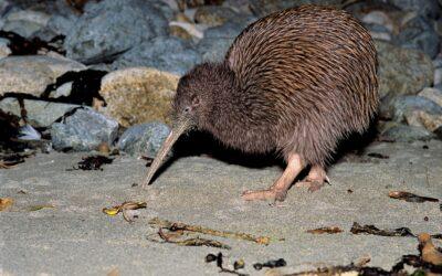 South Island Nature Encounters