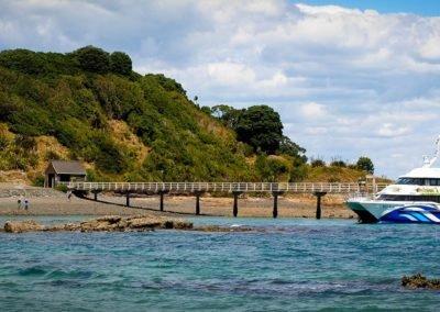 Wharf on Tiritiri Matangi
