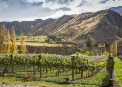 Vineyards at Gibbston Valley
