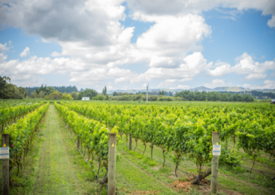 Martinborough Vineyard - Credit Jeff MCEwan